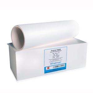 Cytiva 10402506 Blotting Membrane, Protran Nitrocellulose, BA85 Circles, 25mm, 0.45µl Pore Size, 100/pk